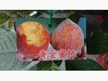 黃金蜜桃嫁接苗/請先來電詢價花苗/樹苗無破損有使用痕跡