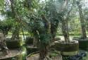 可置放盆栽樹木 水源灌溉充足