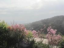 台北買屋,士林買房子,土地出售,獨家專賣新安路陽明山的秘密花園別墅