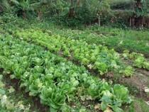 台北買屋,北投買房子,土地出售,適合耕作農作物