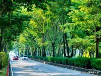 太原路綠園道