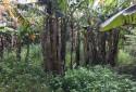 旁有防風林,具保濕、保溫效果