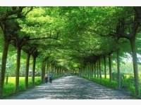 四林樹林步道