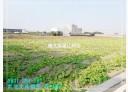 永康區-王行路土地,339.4坪
