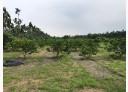 長治鄉-屏21土地,1279.9坪