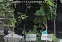 景觀植物標示牌