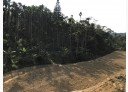 竹山鎮-頂林路土地,9294.9坪