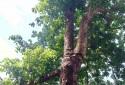 後院大樹 空氣清新 採光佳